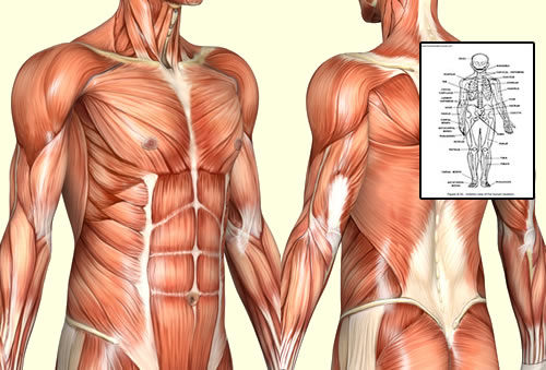 Human Anatomy & Physiology Study Course – Excellent Career ...